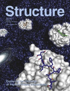 """Peptide-protein interactions on the cover of """"Structure"""""""